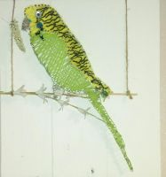 budgie on swing by signsandwonders