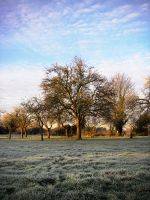 Frosty Morning by ArtlessHmmmm