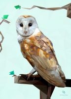 Barn Owl by whikiko