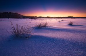Snow Desert by Nitrok