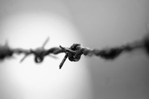 Barbed wire by Monique141