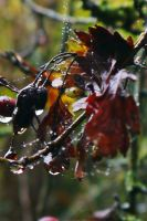 BERRYS AND WEBS AND ALL AUTUMNY THINGS by trevj