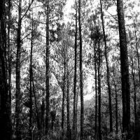 Into the Woods by singkit