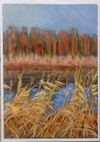 Reeds by h-i-l-e-x
