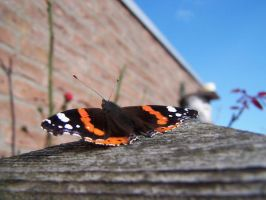 butterfly on a gate by angiak666