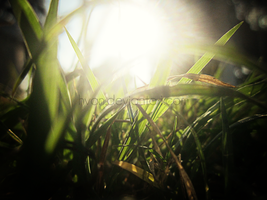 The Grass and the Sun 1 by Hvan