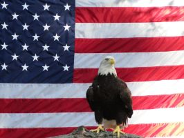 Bold Eagle and American Flag by Chowen2001