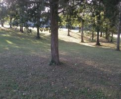 trees in park 7 by JuneButterfly-stock