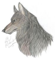 Random Gray Wolf by NightTracker