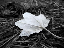 White leaf by Bouwland