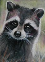 "ATC: ""Baby Raccoon"" by catbones"