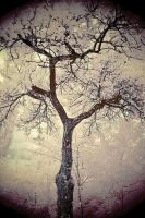 Trees painted White - II by sorny