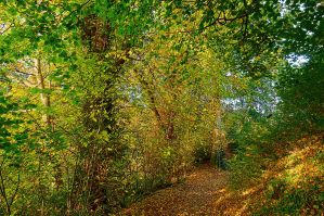 Belvoir Forest Path, Autumn 5 by Gerard1972