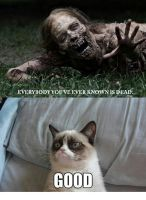 Grumpy Cat Meme by Grumpy-Cat-Fan