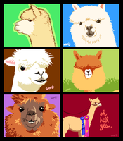 All These Alpacas by w-oo-t