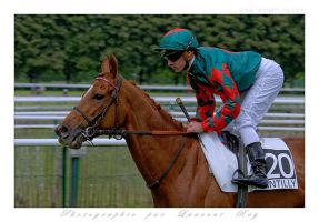 Horse Race - 007 by laurentroy