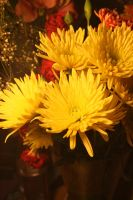 Stock Flowers 2 by Sheiabah-Stock