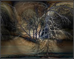 Portrait trees, by fisher57