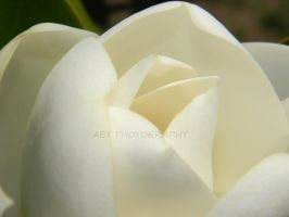 Simplicity by ABT-Photography