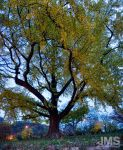 The Big Yellow Tree by steeber