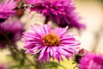 Flower by LePa-Photography