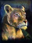 Lioness Scratchboard by Decadia