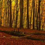 Wonderful Autumn V by Life-For-Sale