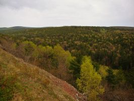 Mixed Deciduous Forest by DailyB