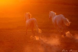 Into the Sun. by VFrance