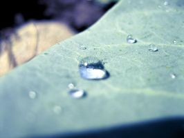 Leaf droplets - Night Effect by OneofakindKnight