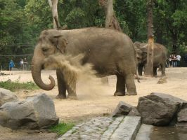 Elephant, dusty by Betws-Y-Coed