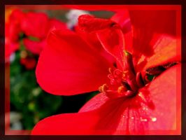 Red September by Tap-Photo-and-Co