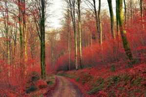 Red Pathway by Aenea-Jones