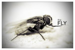 The Fly by arch-satan