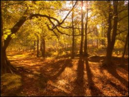 Autumnal Colours by Mohain