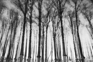 inverted trees by right-angle