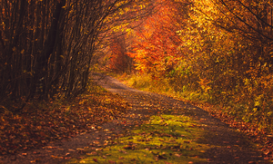 Autumn Road IV by ferrohanc