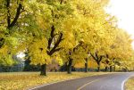 All the Yellow Trees by MPIII