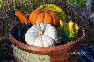 Fall Harvest by Scooby777