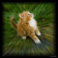 Kitten into Hyperspace by LugburzOxay