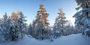 Winter forest panorama by JuhaniViitanen