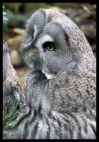 Owl. by ElectedTheRejected