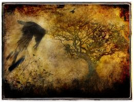 As The Crow Flies by struckdumb