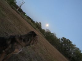 harvest moon by fractal2cry