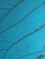 Stock Texture - Leaf Veins III by rockgem