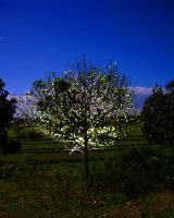 glow tree by mikebass