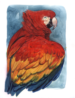 Scarlet Macaw by Camelid