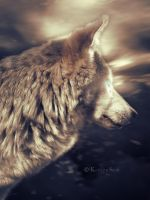 The Wolf by TheDreamBelow