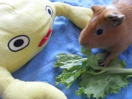 Coco the Guinea Pig 3 by Gexon