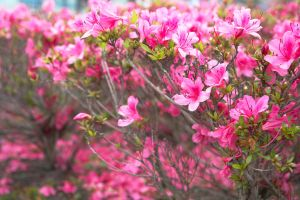 The touch of spring by KyonTyan